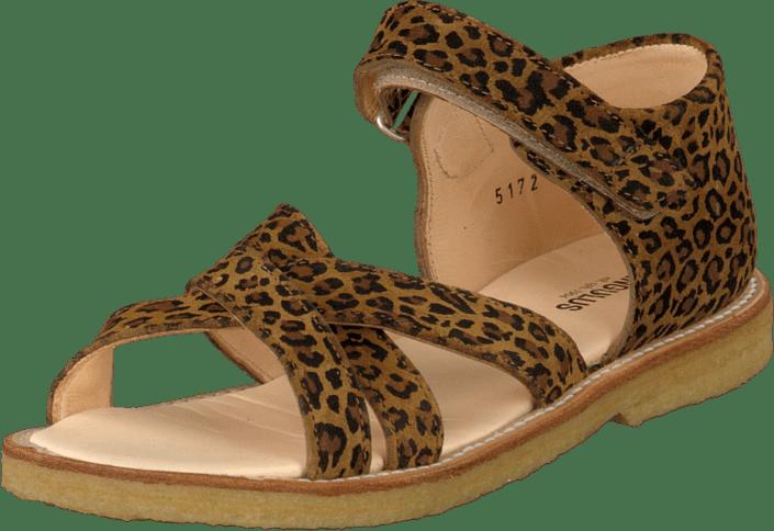 Angulus - 5172-101 Leopard