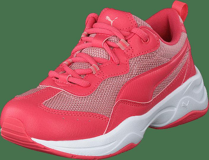 Cilia Ps Calypso Coral-bridal Rose